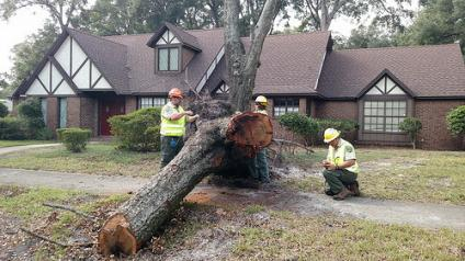 Urban Forest Strike Team Members assess and record tree damage from Hurricane Matthew in 2016.
