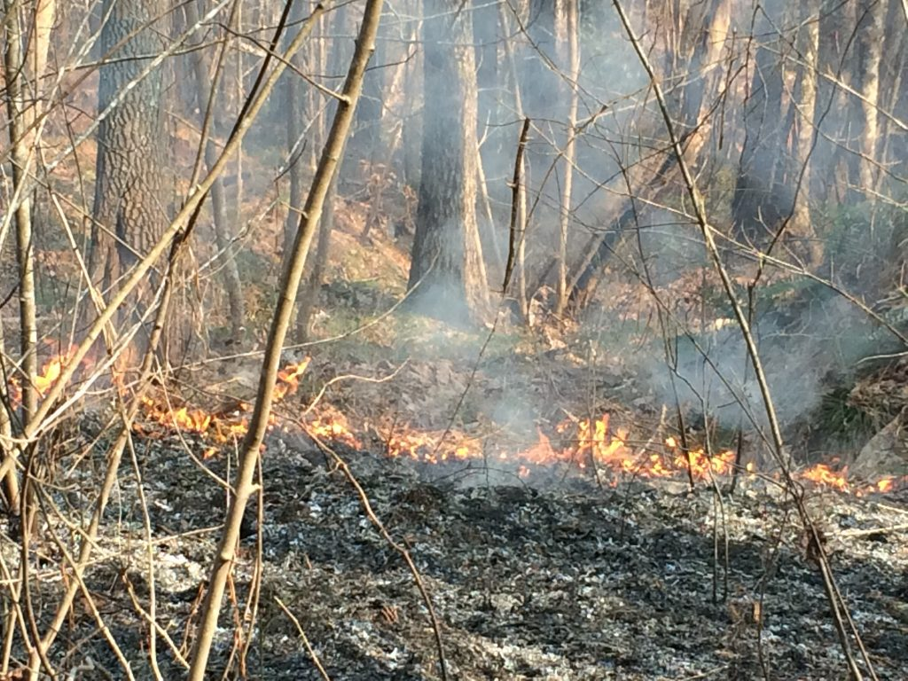 prescribed-fire-north-alabama