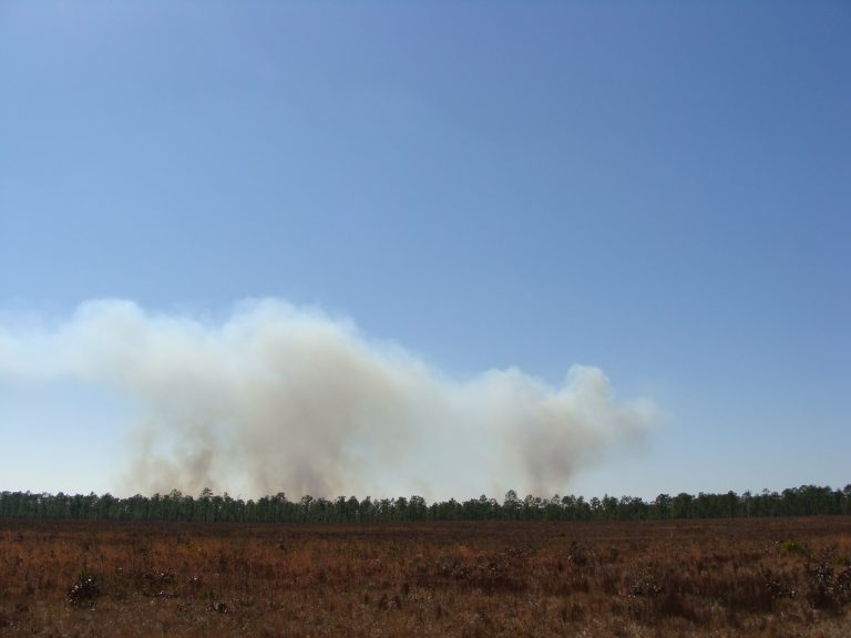 These well developed smoke plumes from a prescribed fire in the southeastern U.S. are similar to those needed for FASMEE. Photo by Yongqiang Liu, USFS.