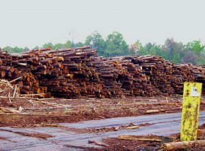 wood-for-bioenergy