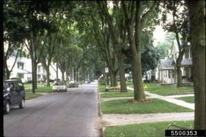 Mature trees line a residential street