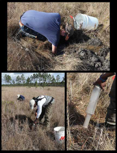 Photo collage showing active sampling methods: excavating and suction