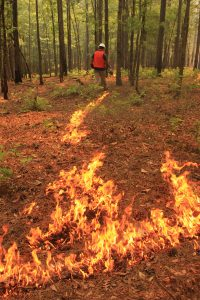 a trail of fire behind a person using a drip torch to start a prescribed burn