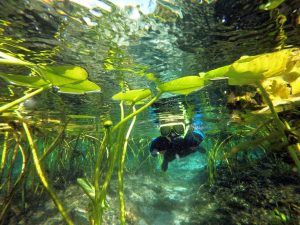 a young person wearing a snorkel mask and wetsuit swims through a cluster of lily pads