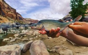 a fish held up in someone's hand, with a rocky stream and blue sky in the background