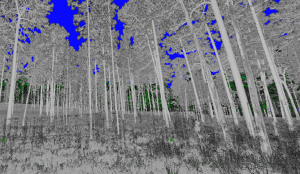 digitized forest