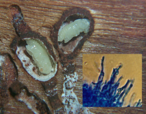 photo collage of beetles and fungus