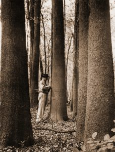 a person stands among giant trees