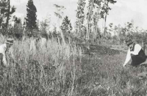 early research study using prescribed fire