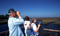 image: birdwatchers on a salt marsh