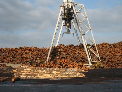 photo: logs for export in Olympia, Washington