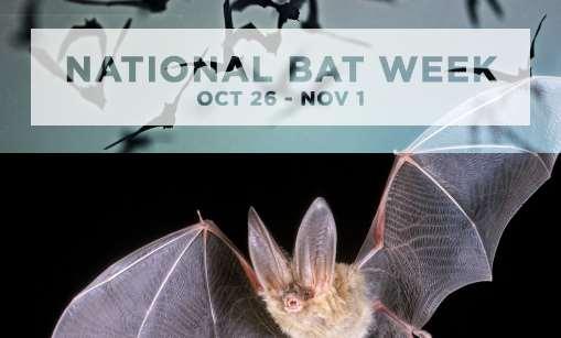 National Bat Week 2014 logo