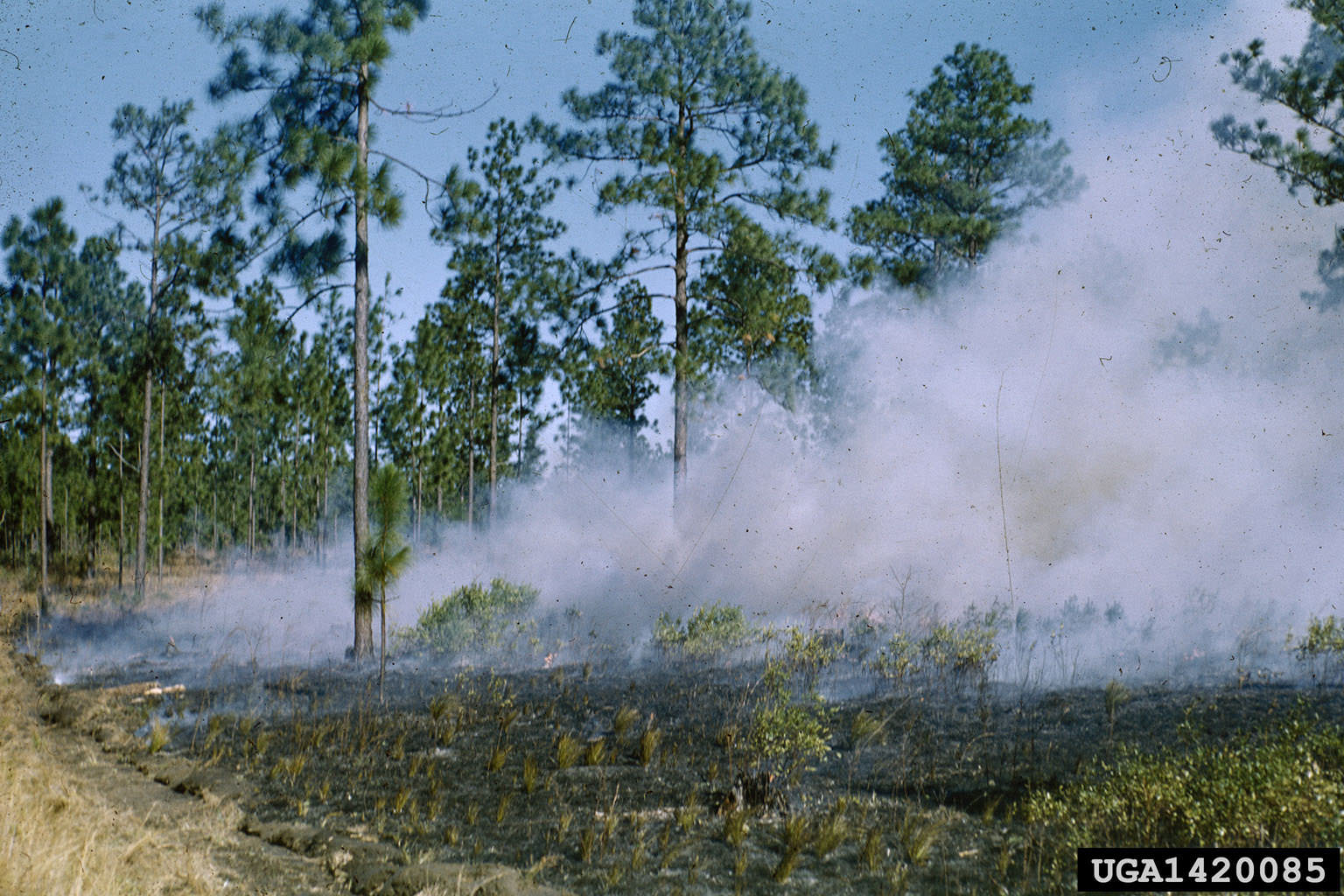 Controlled burn on Escambia Experimental Forest