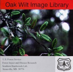 Ash Pests Image Library CD-ROM Cover