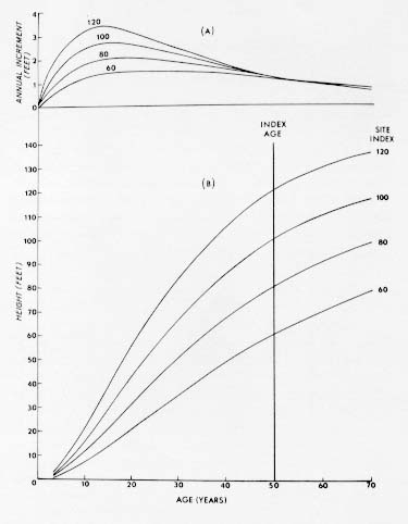 {P. strobus: annual increment curves}