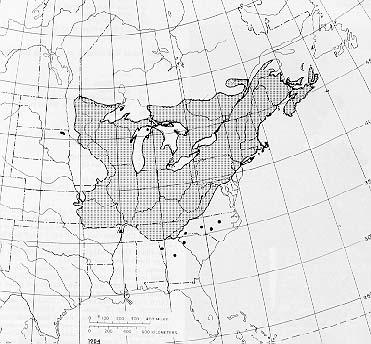 {The native range of Acer saccharum}