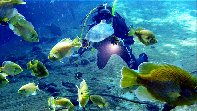Barnett SCUBA diving among school of fish