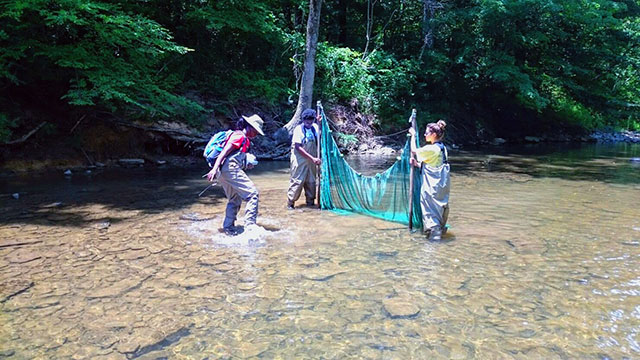 Barnett and team using a seine to collect fish in a stream